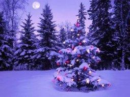 Новогодняя елка опасна для здоровья