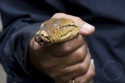 Первая помощь при укусе ядовитых змей